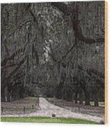 The 99 Oak Trees Wood Print
