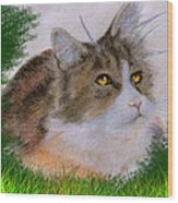 The Abandoned Kitten Wood Print
