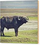 The African Buffalo. Ngorongoro In Tanzania. Wood Print