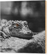 The Alligator's Eying You Wood Print by Linda Leeming