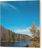 The Alpine Larch Tree On Bald Mountain Pond Wood Print