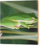 The American Green Tree Frog Wood Print