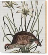 The American Partridge Wood Print
