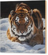 The Amur Tiger Wood Print