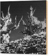 The Ancients - 1001 Wood Print