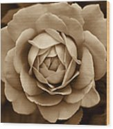 The Antique Rose Flower Wood Print