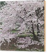 The Arboretum Cherry Blossoms Wood Print