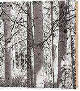 The Aspens #3 Wood Print