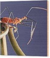Garden Assassin Bug Wood Print