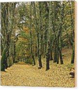 The Autumn Path Wood Print