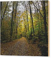 The Back Roads Of Autumn Wood Print