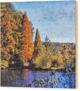 The Bald Cypress Wood Print