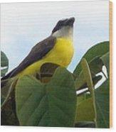 The Banaquit Of Costa Rica Wood Print