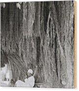 The Banyan Tree Wood Print