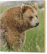 The Bear Dry Brushed Wood Print