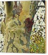 The Beatiful Sycamore Wood Print