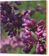 The Beautiful Redbud Tree Wood Print