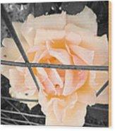 The Beautiful Rose Wood Print