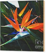 The Beauty Of A Bird Of Paradise Wood Print