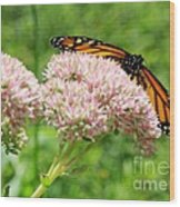 The Beauty Of A Monarch Wood Print
