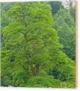 The Beauty Of A Tree Wood Print