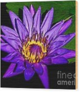 The Beauty Of A Water Liliy Wood Print