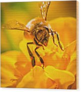 The Bee Gets Its Pollen Wood Print