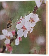 The Bee In The Cherry Tree Wood Print