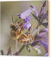 The Bee's Knees Wood Print