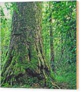 The Big Sycamore Tree Wood Print