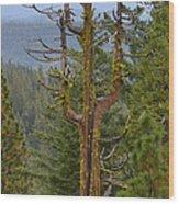 The Big Tree Fork Wood Print