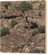 The Bighorn Uwe Wood Print