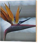 The Bird Of Paradise Wood Print