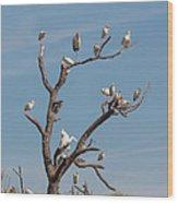 The Bird Tree Wood Print