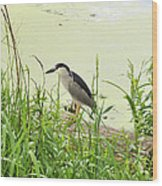 The Black-crowned Night Heron Wood Print