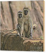 The Black-faced Vervet Monkey Wood Print
