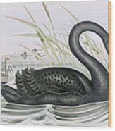 The Black Swan Wood Print by John Gould