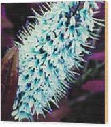 The Blue Blossom Wood Print