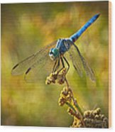 The Blue Dragonfly  Wood Print