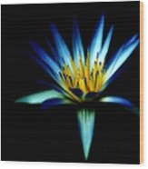The Blue Lotus Of Egypt Wood Print