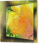 The Blushing Yellow Rose Wood Print
