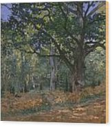 The Bodmer Oak Wood Print