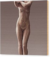 The Body Systems Female Wood Print