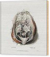The Brain Circa 1802 Wood Print