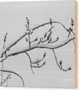 The Branch Of Art Wood Print