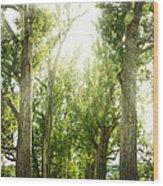 The Bright Path Wood Print