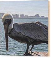 The Brown Pelican  Wood Print