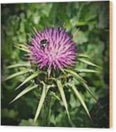 The Bug And The Thistle Wood Print