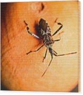 The Bug Wood Print