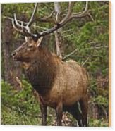 The Bull Elk Wood Print